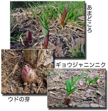 20050411eiichi