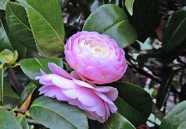 20050728motofumi1