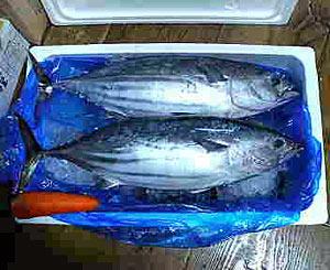 20051008natsuki