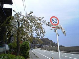 20080426chieko1